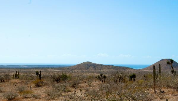 Close to Beach lots, Beautiful Land — Parcel #226