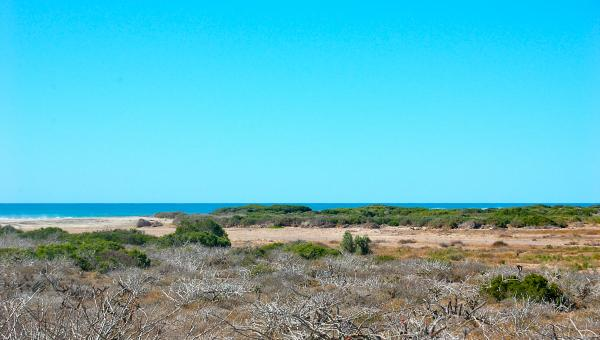 Majestic ocean view, lots of acreage = starting at $2,500-per-a