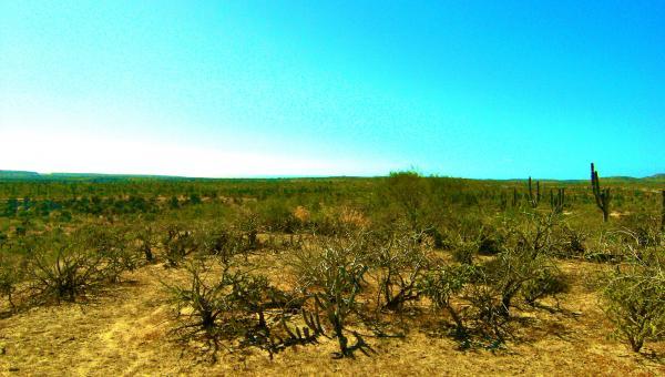 150 acres near Town & Beach