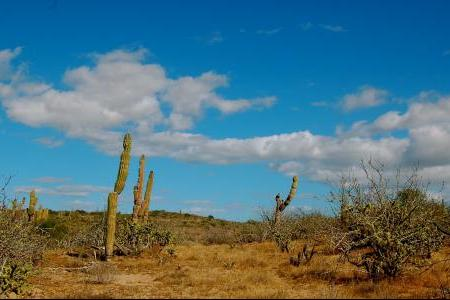 PACIFIC_CACTUS_SKY_med-8